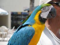 parrotcloseup