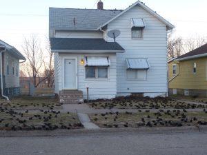 """The Birds."""