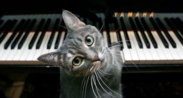 nora_the_piano_playing_cat
