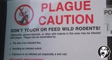 plague warning