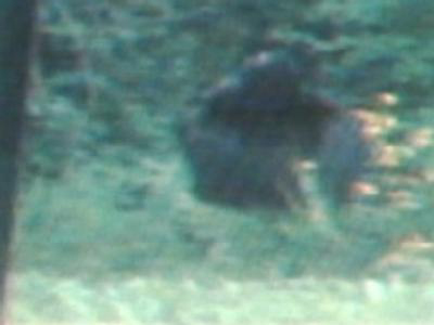 backyard_bigfoot_full