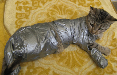 duct_tape_cat_full