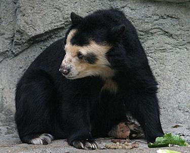 hairless_bears3