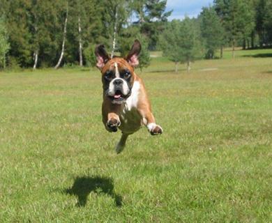 flying_dogsF