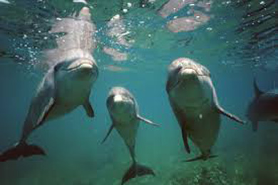dolphins_worldC