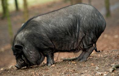wild_hogs_atlantaB
