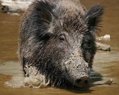 wild_hogs_atlantaE