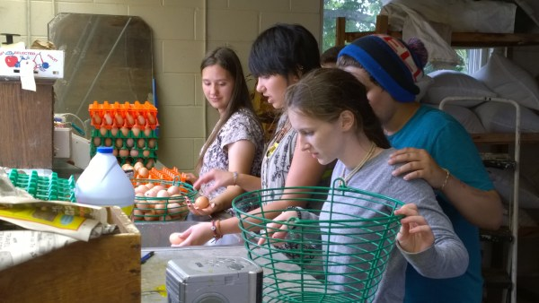 Olney Friends School students wash eggs gathered from the farm at Olney Friends School.
