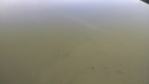 Officials of the Ohio County Health Department announced late last week that the blue-green algae had dissipated in along the Ohio River in the Wheeling area.