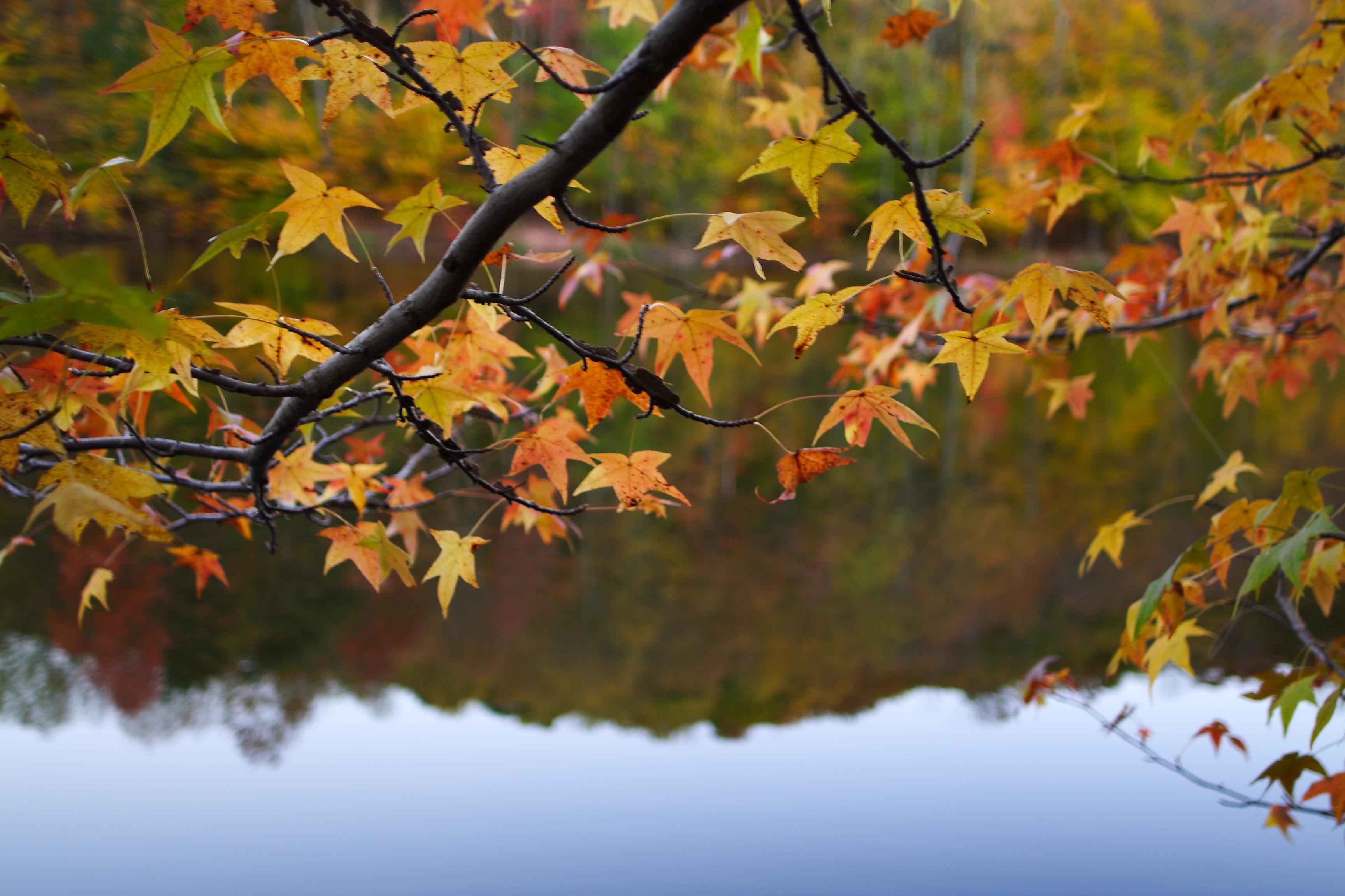 Fall Leaf Pattern Wallpaper Weelunk Weekender Weelunk