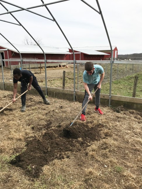 Two students working at the farm at Olney Friends School.