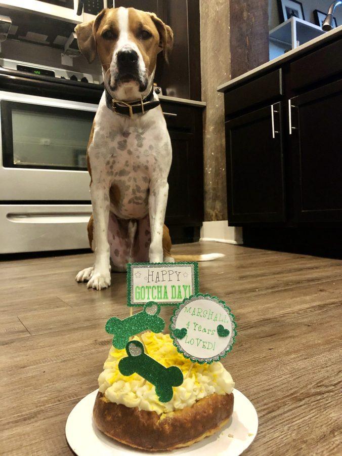 Zeb's Barky Bites Cake
