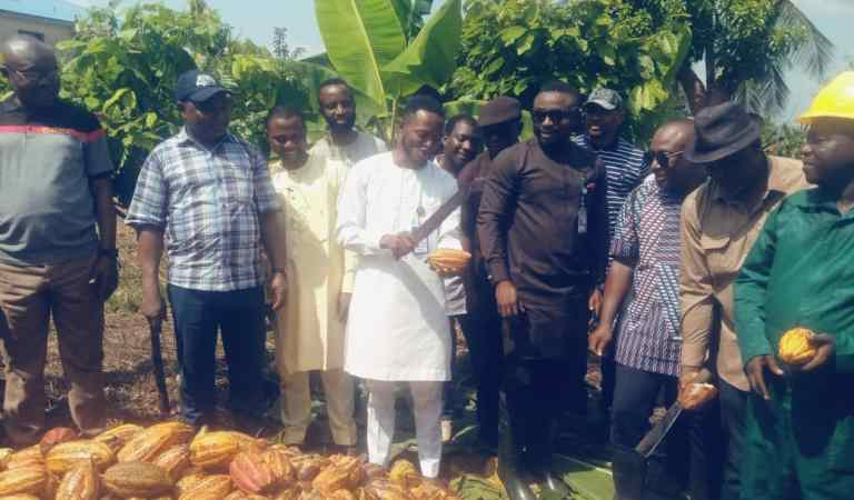 Cross River Govt Unveils First Harvest of Cocoa Model Farm In Calabar Municipal