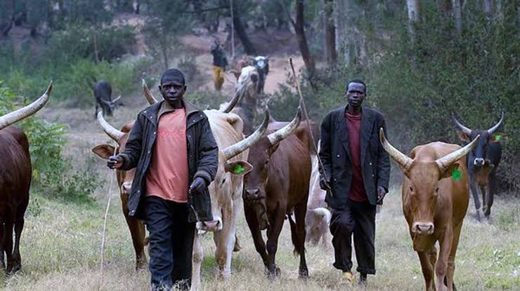 Herdsmen Beat Me Up, I Wanted To Show Them I Am A Strong Yoruba Man But My Wife Was With Me — Farmer