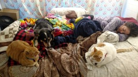 Our kibble-powered bed warmers