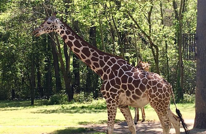 Best U S  Zoos With Kids – We Go With Kids!