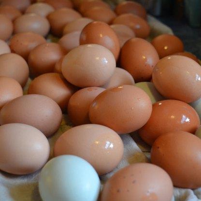 We Grow Free-Range Eggs