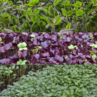 We Grow Microgreens