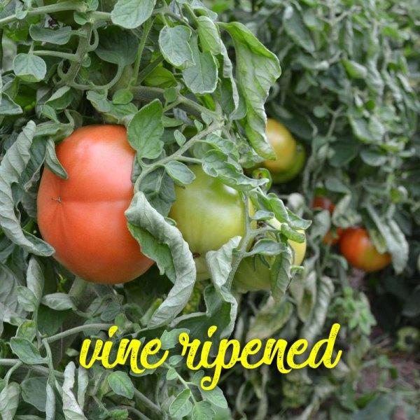 We Grow Slicing Tomatoes
