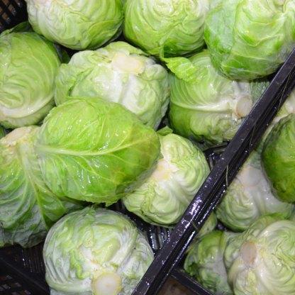 We Grow Cabbage