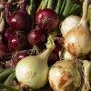 We Grow Onions