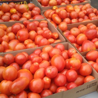 We Grow Sauce Roma Tomatoes