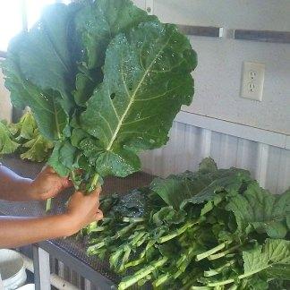 We Grow Collard Greens