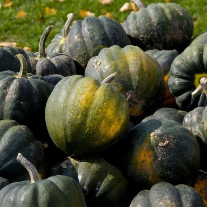 We Grow Winter Squash