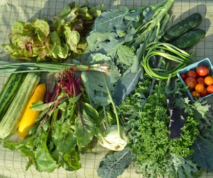 We Grow CSA Farm Weekly Membership