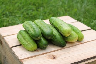 We Grow Boston Pickling Cukes