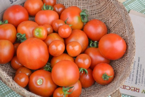 First tomatoes of the season at We Grow LLC