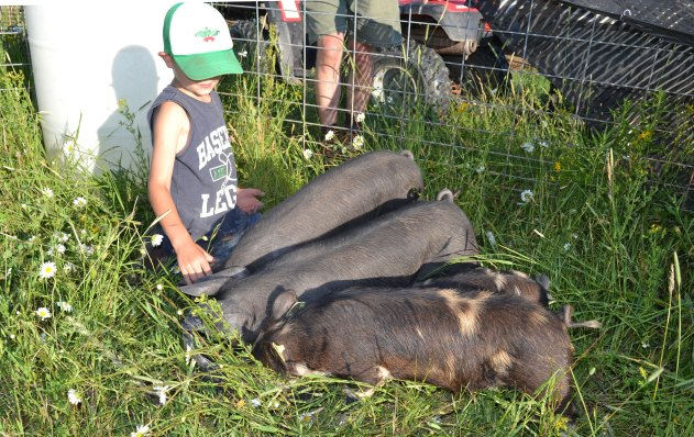 Idaho Pasture Pigs and Large Black Hogs