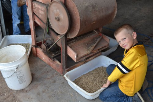 Dene assisting with the old fanning mill cleaning the rye seed.