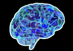 hersenen - blauw