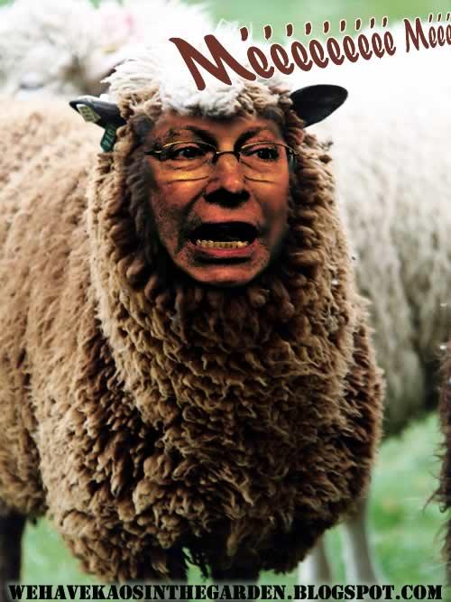 correia-campos-ovelha-negra