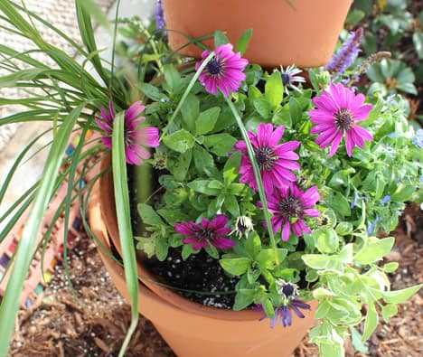 9579 DIY Garden Project: Topsy Turvy Flower Planter