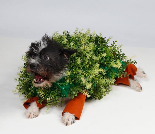 DIY Halloween: Chia Pet Dog Costume