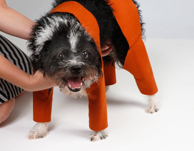 DIY Halloween: Chia Pet Dog Costume