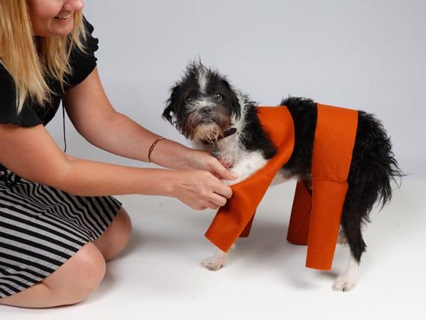 Dog-halloween-costume