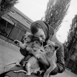 Now they look a handful! 1960s girl with 3 lion cubs