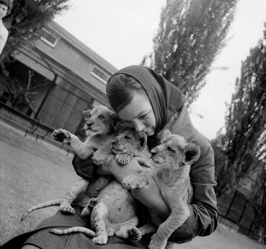 1960s girl with lion cubs