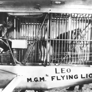 Forget Snakes on a Plane, how about the MGM Lion?