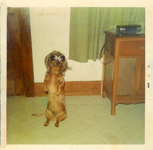 Le chien, so chic