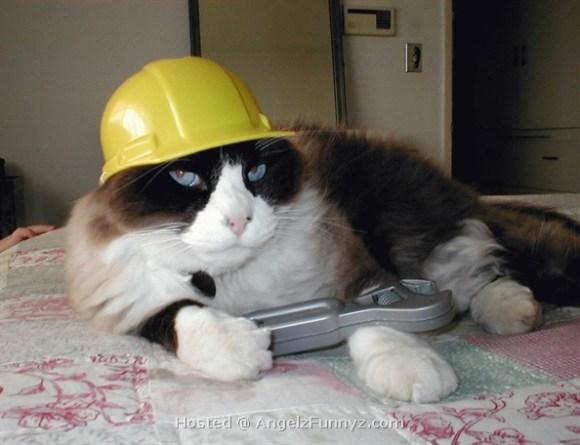 Cat-site-under-construction
