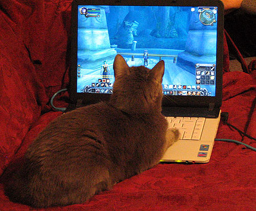 world-of-warcraft-cat