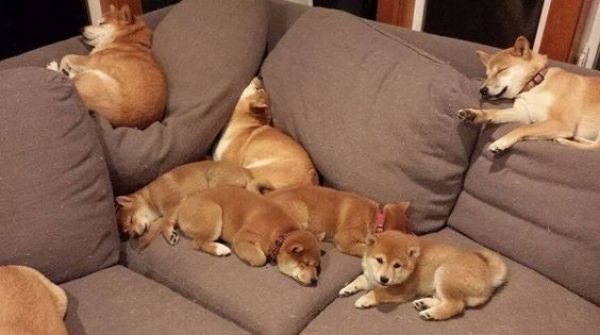 Dogs making full use of a couch
