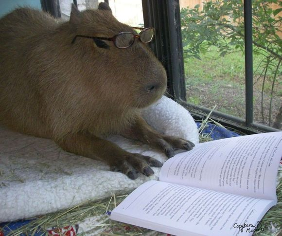 capybara-reading-a-book-on-a-gloomy-day