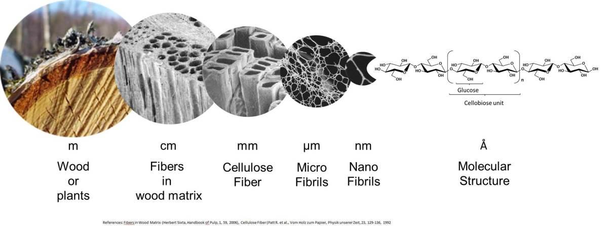 The structure of wood: From fibers to molecules - Weidmann Fiber Technology