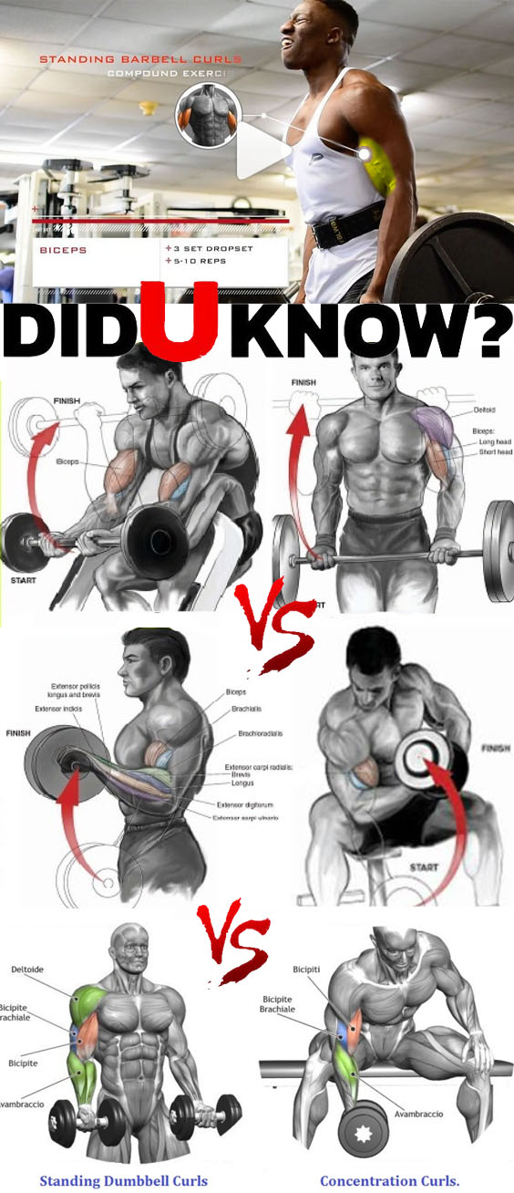 Bicep workout for grow