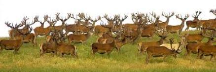 Best Quality New Zealand Deer Antler Velvet